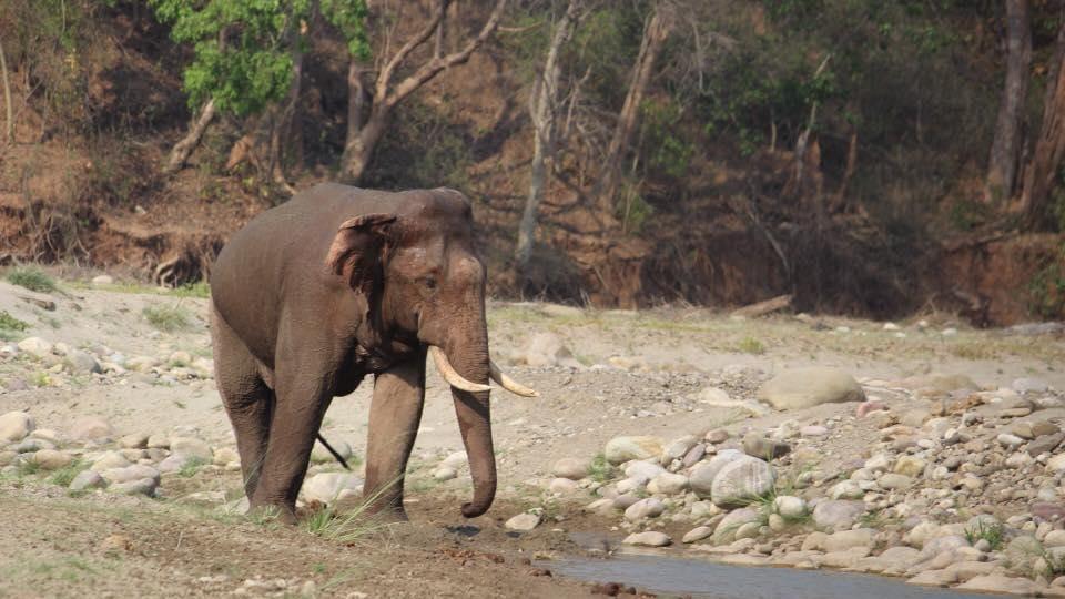 Uttarakhand,Rajaji Tiger Reserve,NGT