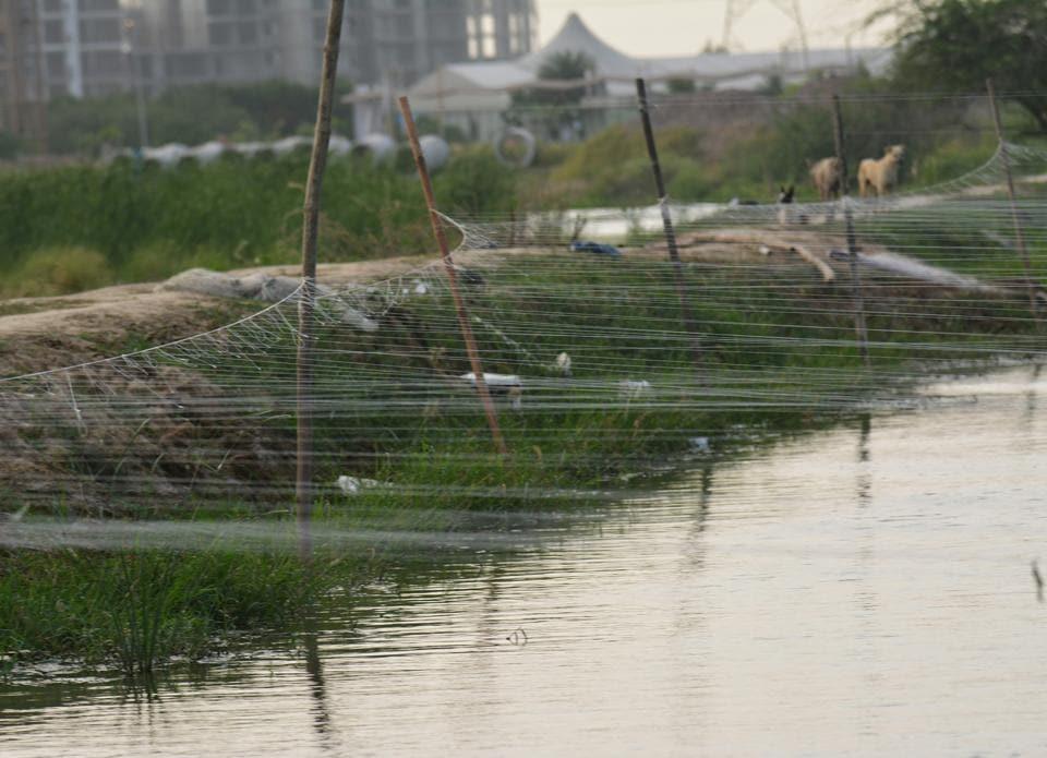 Basai wetland,migratory birds,Dwarka Expressway