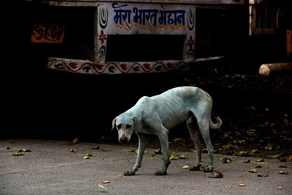 pollution,mumbai's blue dogs,water pollution