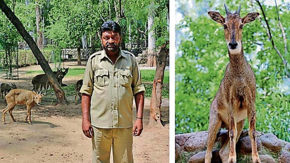 goat-antelope species,Lord Louis Mountbatten,maharaja of Mewar-Jodhpur