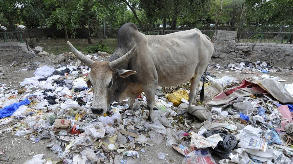 A Noida resident seeks action against increasing heap of open garbage dump at Sector 138-140.