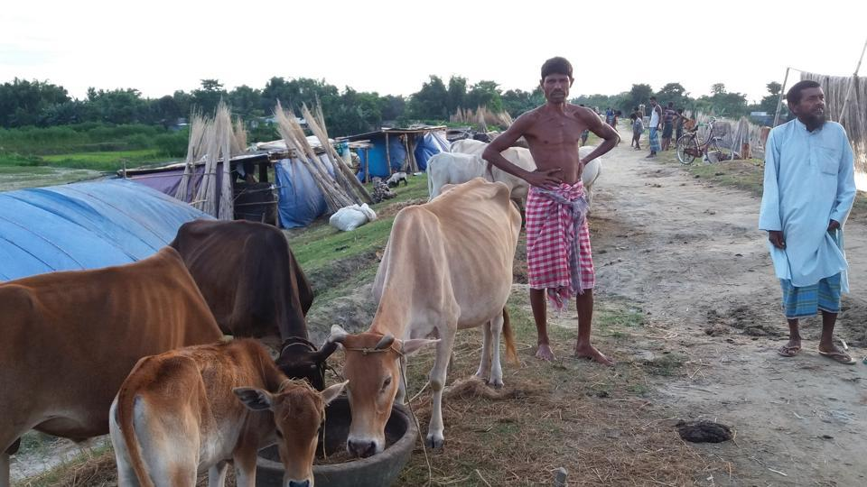 Residents of Bidyapara village of Takimari goan panchayat with their cattle outside their makeshift homes on an embankment.