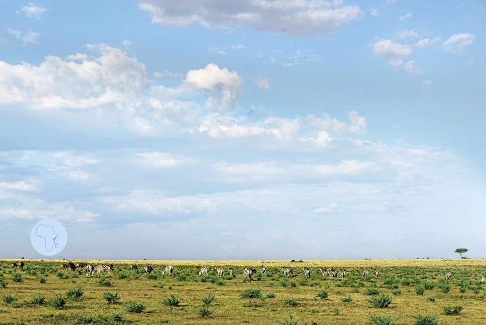 Maasai Mara boasts the largest terrestrial concentration of wildlife on our planet