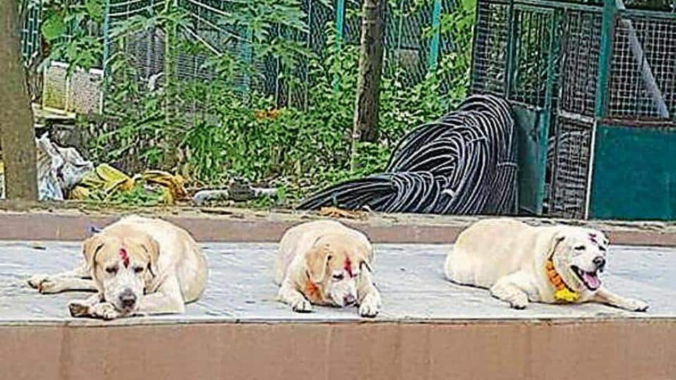 Mumbai's airport dog squad heroes retire to Virar farm house after