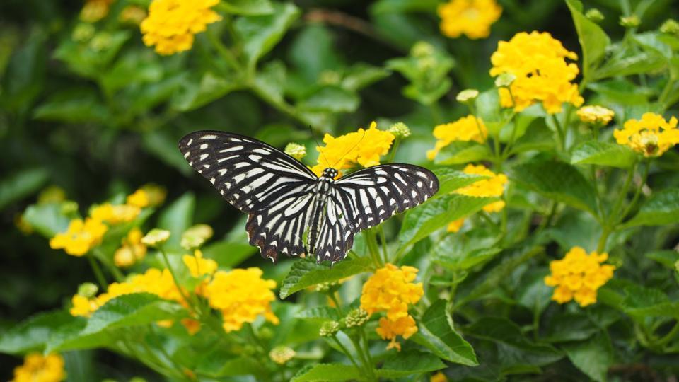 Butterfly,Asola Bhatti Wildlife Sanctuary,Aravalli Bio Diversity Park