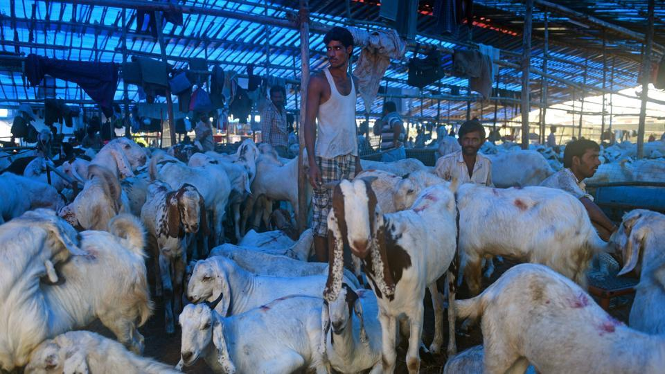 Traders are sending pictures and videos of rams through WhatsApp to prospective buyers.