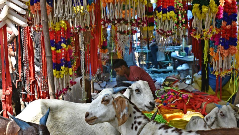 However, doubt looms over the sale of the animals among traders this year owing to fear of 'gau rakshaks', preventing them from transporting goats to bigger cities from the hinterlands where they are bred, providing sellers far higher returns compared to local markets. (Vipin Kumar/HT PHOTO)