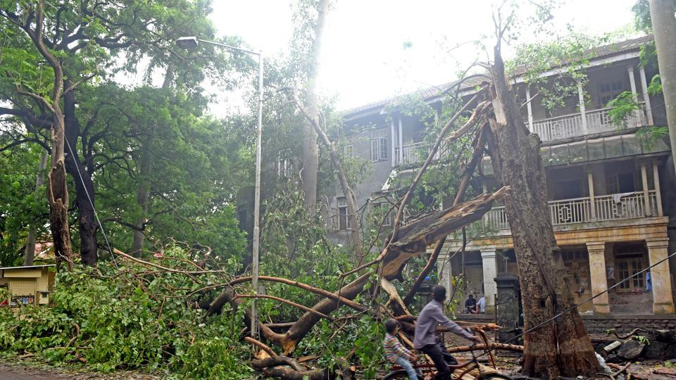 A tree fell in Matunga after Tuesday's downpour.