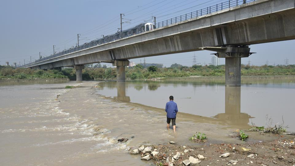 The temporary bridge made by the villagers for cows and buffaloes in the middle of the river Yamuna.