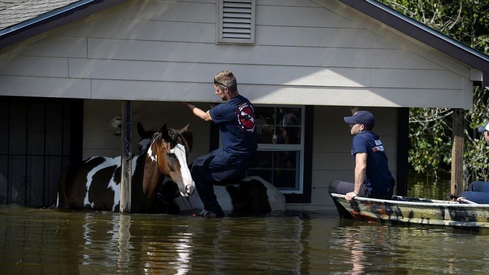 Beaumont firefighters rescue two horses stranded in floodwaters from Tropical Storm Harvey in the north end of Beaumont, Texas on Thursday, Aug. 31, 2017.