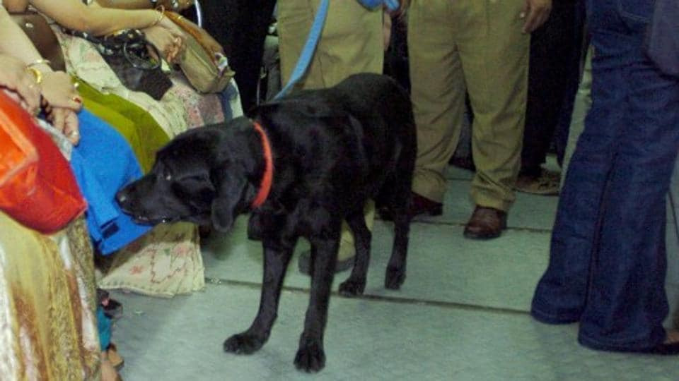 A police sniffer dog at work.