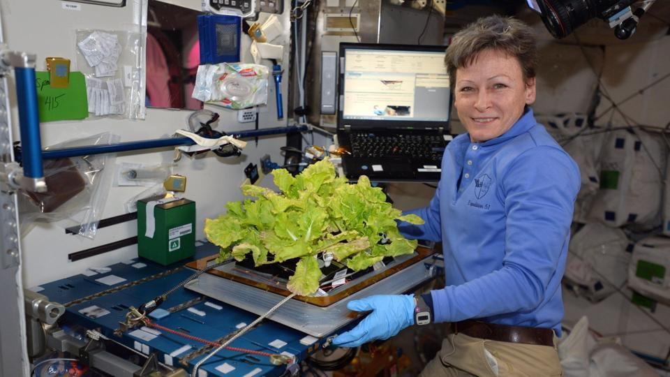 In this image posted to her Twitter feed on May 30, 2017, astronaut Peggy Whitson holds up Chinese cabbage grown in the International Space Station.