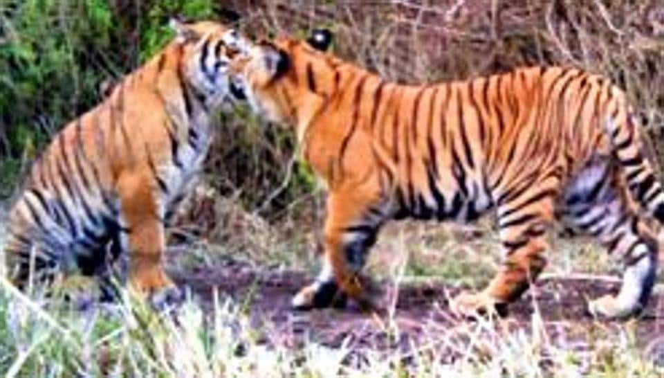Established in 2013, the Mukundara Hills tiger reserve in Rajasthan  will get three tigers by the end of the year.