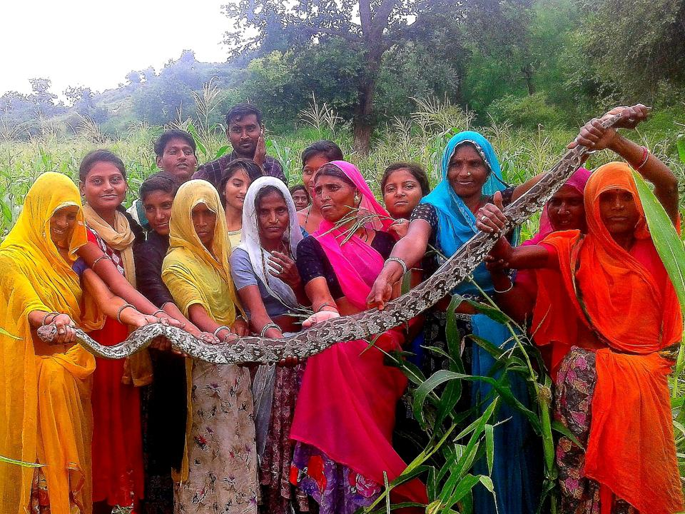 Women from Samecha village in Udaipur pose with the snake that they caught and guarded.