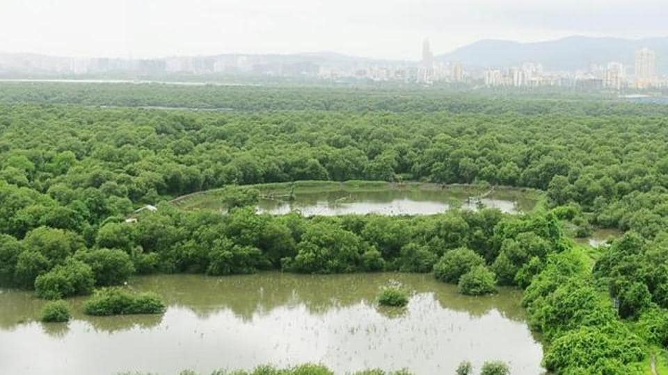 Mangrove cell officials said the method would be cost-effective, fast and can be repeated instead of entering mangrove patches with seeds only once a year