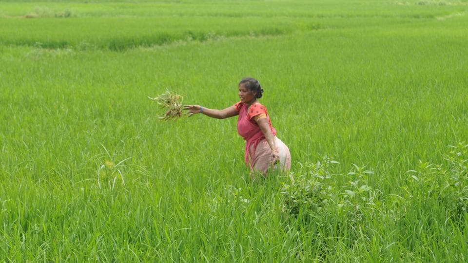 Launched in August 2016, the crop insurance scheme aims to shield farmers from nature's fury and crop damage.