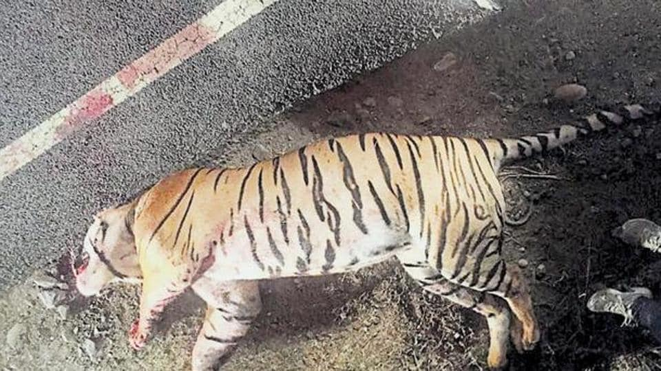 Uttarakhand News,National Highway,wild animals