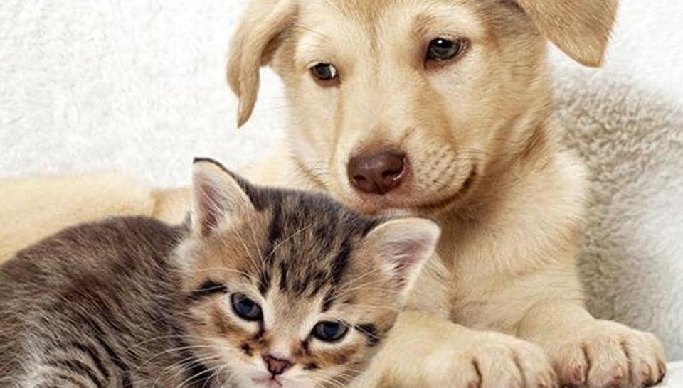 Pet animals,Cancer in animals,Cattle