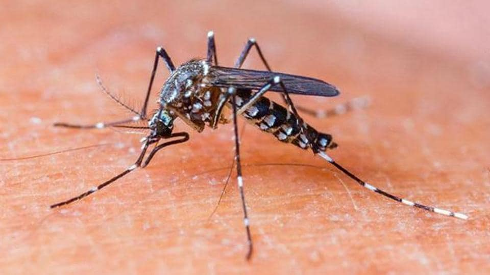 The increase in dengue cases is expected to continue to increase due to humidity and water-logging which gives rise to mosquito breeding and to diseases.