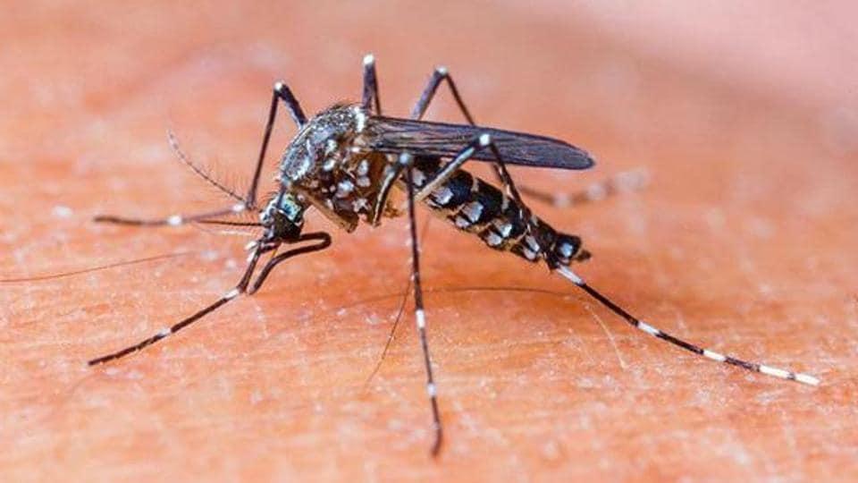 dengue,mosquito-borne disease,dengue toll
