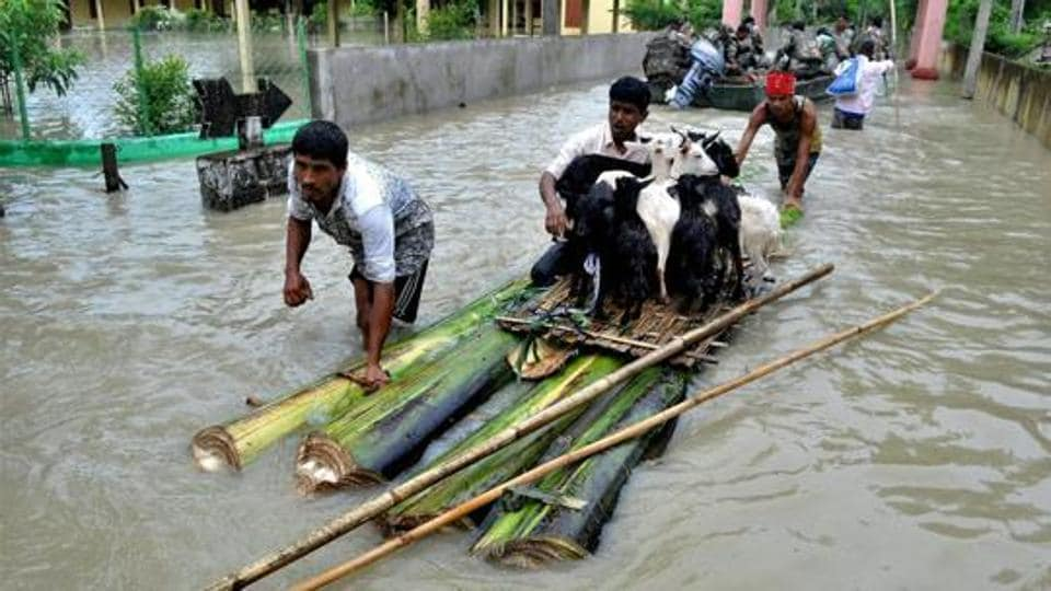 Villagers ferrying their cattle to safety on a raft made with banana plant stems from a flood-hit village in Nagaon district of Assam.