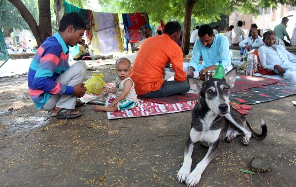 Stray dogs,Lucknow,Lucknow Municipal Corporation