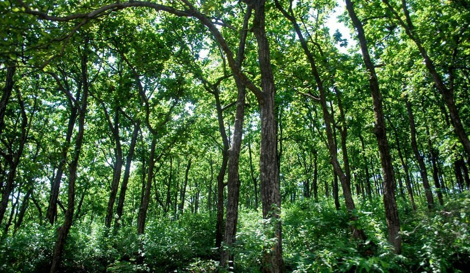 The soil in India's forest lands is degrading, which means it is not storing carbon or retaining moisture.