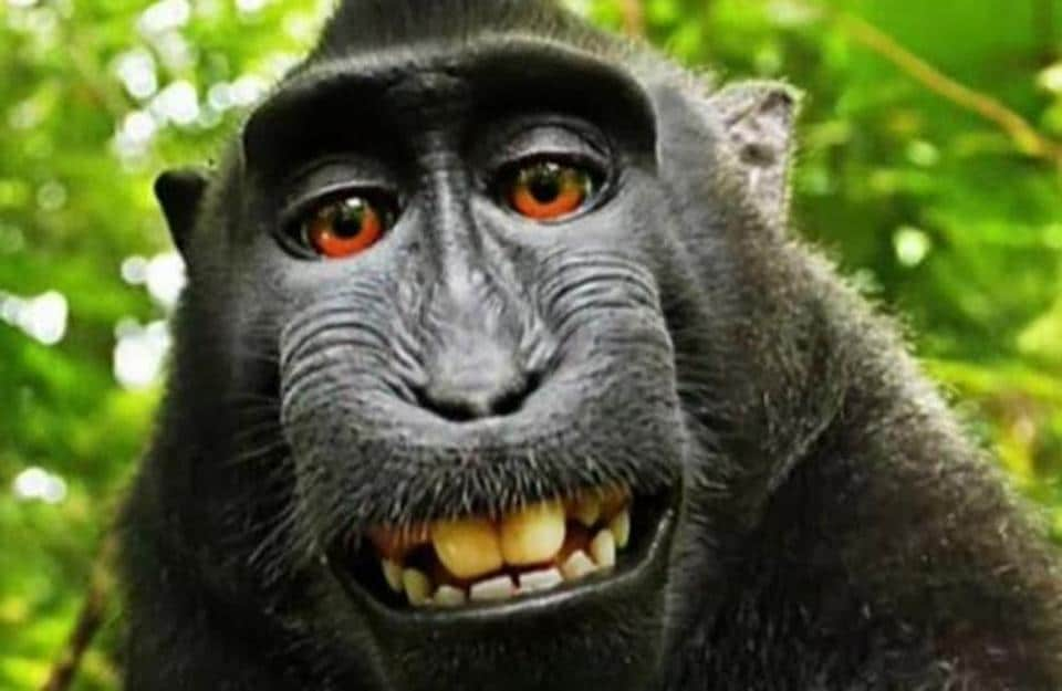 PETA sued on behalf of the monkey in 2015, seeking financial control of the photographs for the benefit of the monkey named Naruto that snapped the photos with David Slater's camera.