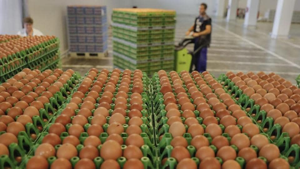 Mumbai news,eggs shortage,maharashtra government