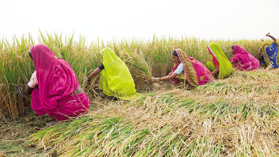 Women farmers in a village in Maharajganj district of Uttar Pradesh. Some 86 lakh farmers across the state are expected to benefit under the loan waiver scheme. (HTfile photo)