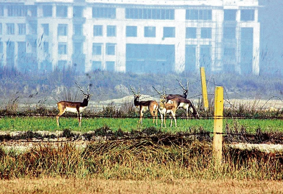 Bil Akbarpur, Datawali and Dadri wetland is home to a variety of wildlife such as Blackbucks, Blue Bulls, Chinkara, Sarus (state bird of UP), Bluethroat and waterfowls such as Malard, Pintale, Shovelers, Garganey and Pochards.