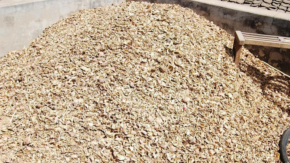 The details gathered from police have revealed that around 1,164 kg poppy husk has been recovered in the past six months and six 'peddlers' from Jammu and Kashmir besides five locals have been arrested.