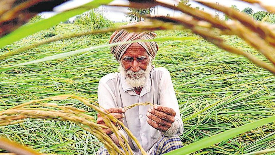"""""""The government should be allowed by EC to provide relief of Rs 2 lakh to farmers before the next crop cycle,"""" said Dera Baba Nanak MLA Sukhjinder Randhawa said."""