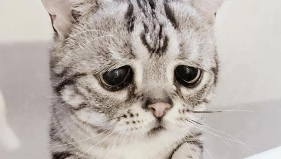 The Saddest Cat On The Internet Wants You To Give Him A Hug - The 18 saddest photos on the internet