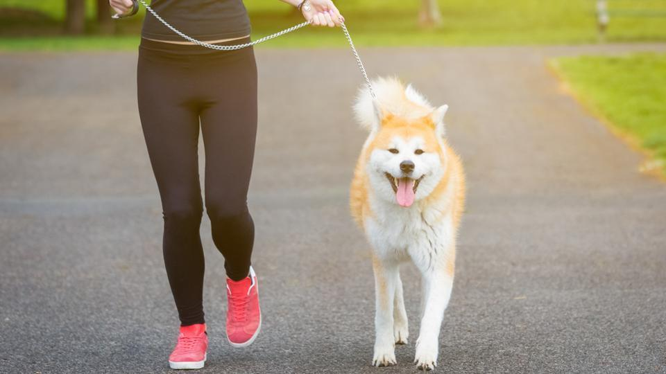 Treatment of obesity for dogs involves feeding a purpose-formulated food in restricted quantities, as well as increasing physical activity.