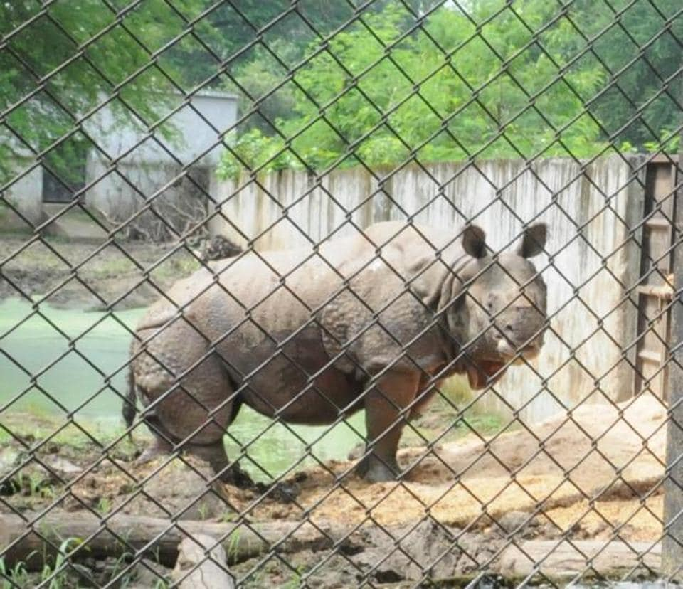 Patna zoo becomes 'leader' in rhino births, gets new captive