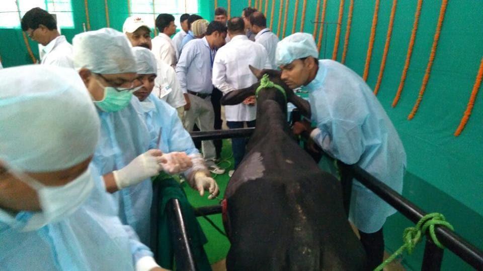 Animal surgery,Veterinary doctors,Bull