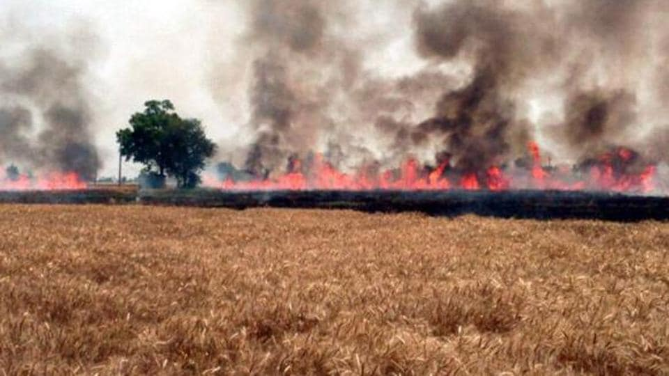 The straw burning has become a major environmental issue, the absence of any subsidy on farm machinery is restricting farmers from using them.