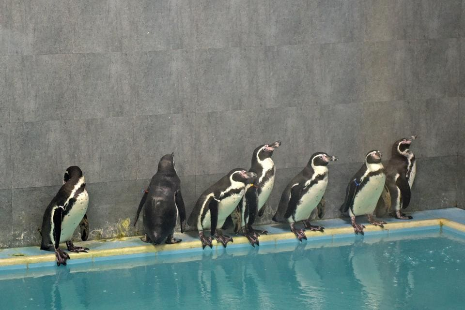 The BMChas become more cautious after the penguin fiasco.
