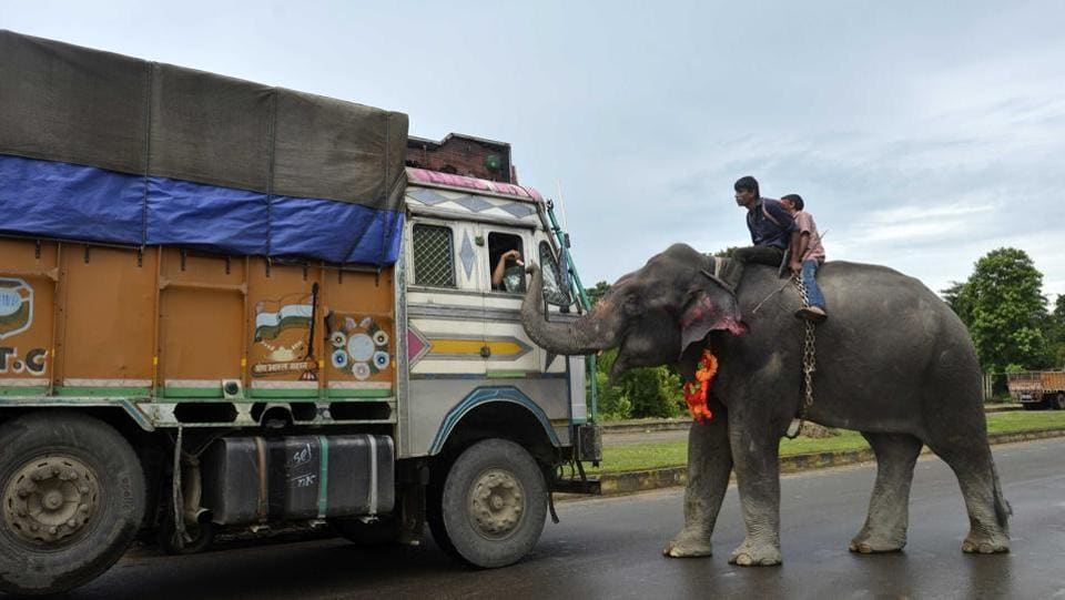 An Indian mahout rides an elephant as he collects money from a driver on the National Highway, some 35kms from Dharmanagar in the northeastern state of Tripura . (AFP)