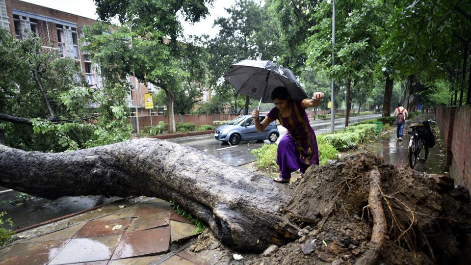 A tree  fell at Madhav Scindia Marg road in the afternoon, briefly halting the traffic in New Delhi. (Arun Sharma/HT PHOTO)