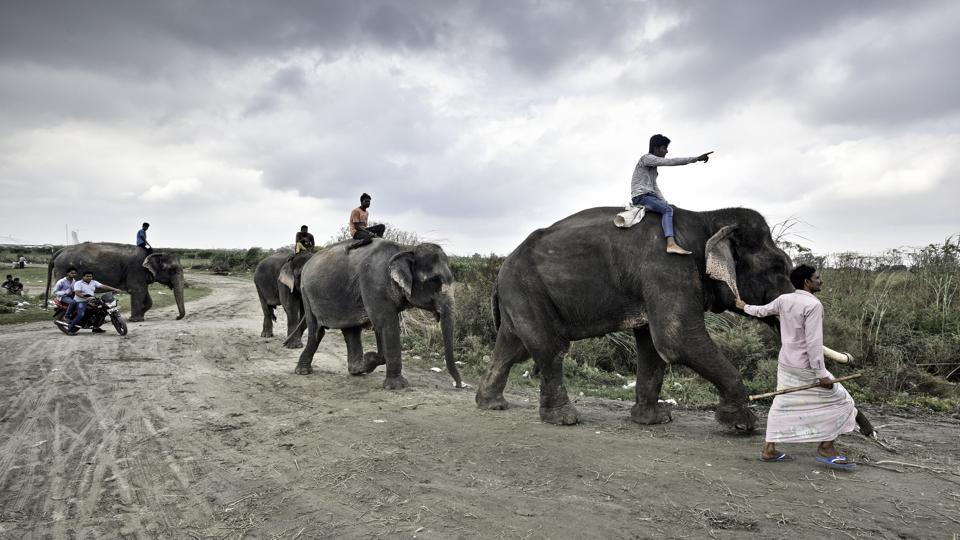 The tuskers of Wazirabad are taken for their daily walk to the Yamuna. During the British rule, elephants were used primarily for ceremonial practices in the royal courts, as well as for carrying logs of wood back from the forests of Assam and Arunachal Pradesh.  (Arun Sharma / HT PHOTO)