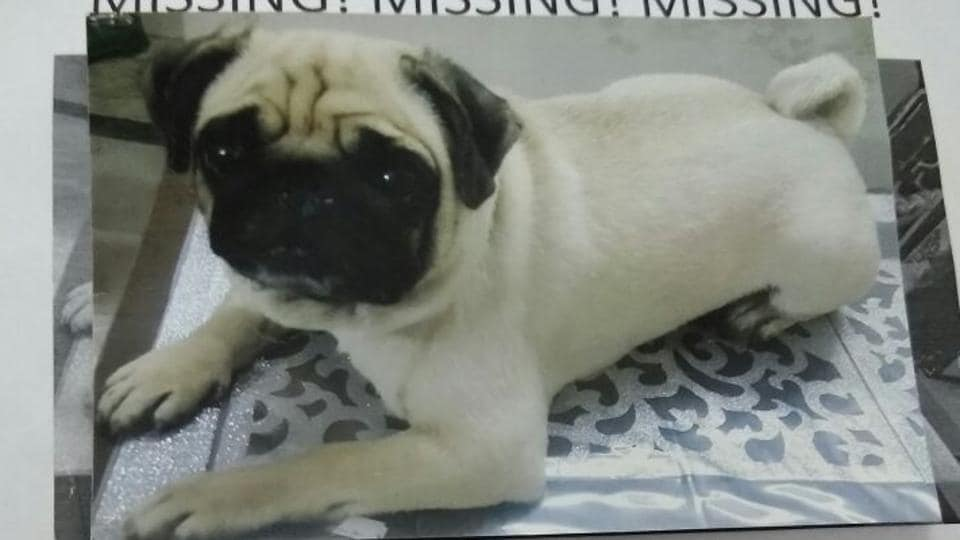 The owners of the pug have put up 400 posters in Rohini announcing a reward of Rs 5,000 for anyone who finds their pet.