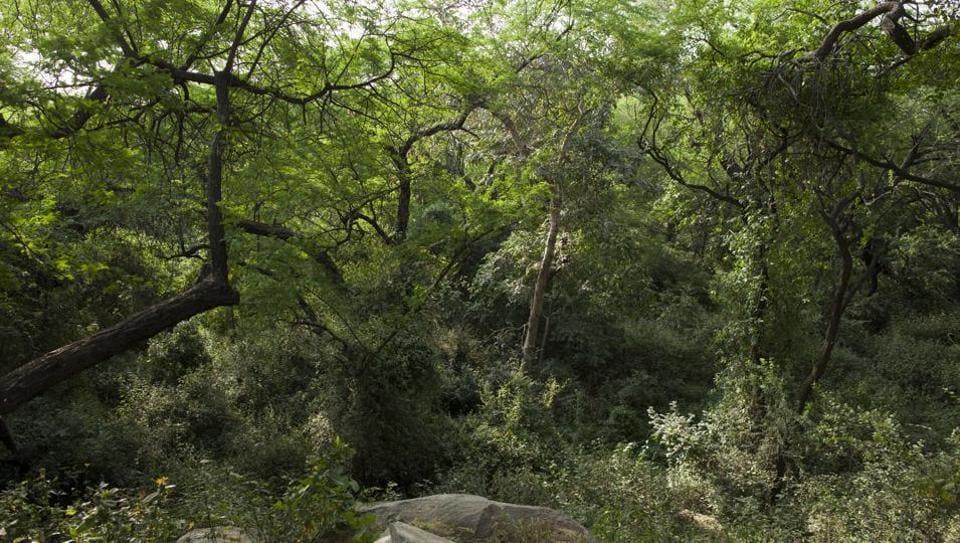Aravallis,Delhi ridge,the ridge