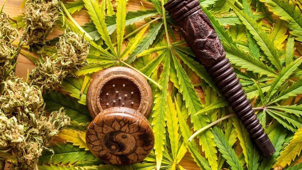 Marijuana,Marijuana study,Study on marijuana