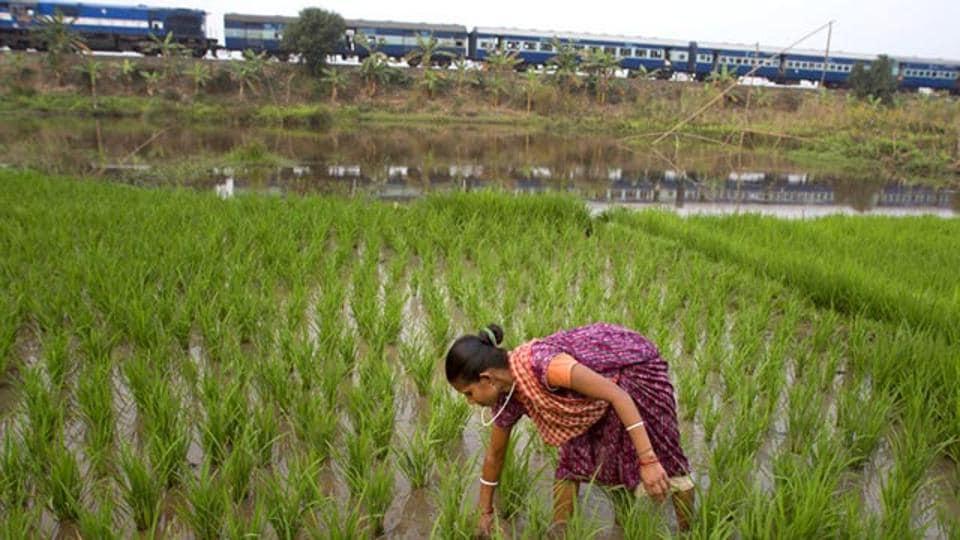 Kharif foodgrain production,Government estimates,Foodgrain production shortfall