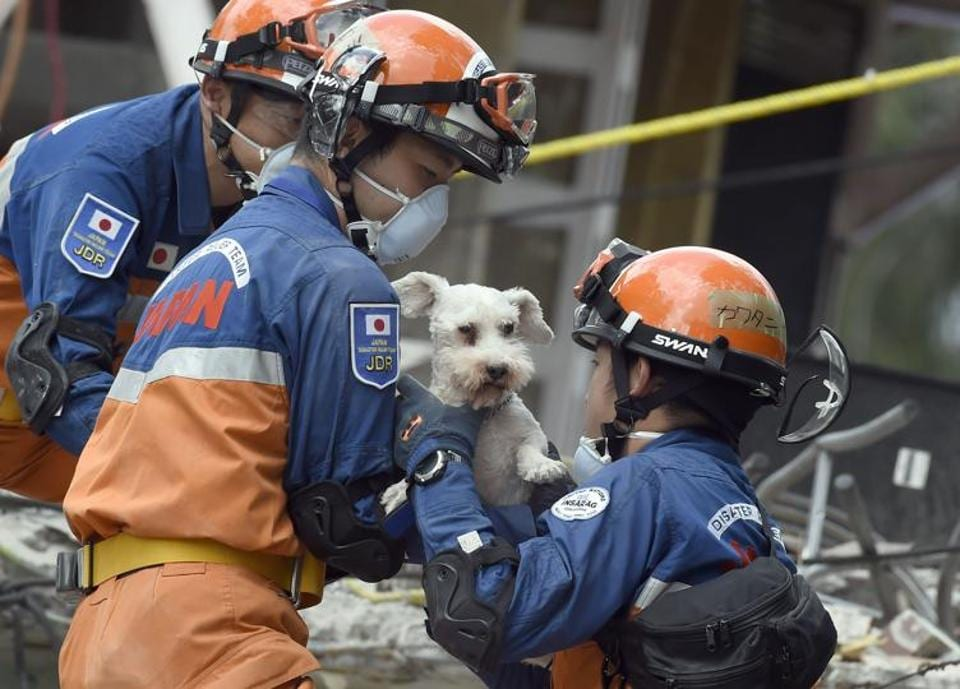 A dog who survived the quake is pulled out of the rubble from a flattened building by rescuers in Mexico City on Sunday.