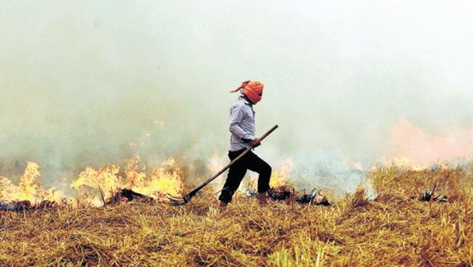 Stubble burning in Punjab is rampant despite a ban on the practice.