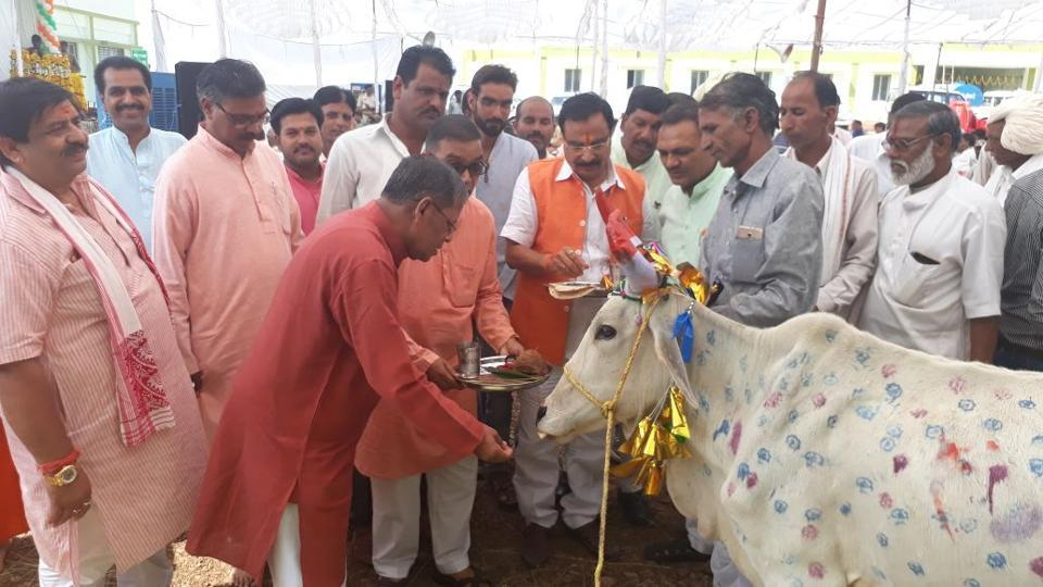 The cow sanctuary will also double as a centre of research on Indian cattle breeds.