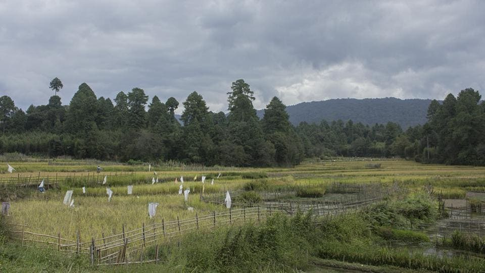 The Ziro valley is lush and quiet, where one can actually hear crickets in the paddy fields. Getting there takes an overnight train journey from Guwahati. (Paroma Mukherjee / HT Photo)
